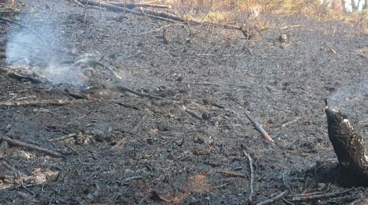 Einige Quadratmeter Wiesenfläche gerieten wegen des Funkenfluges in Brand.