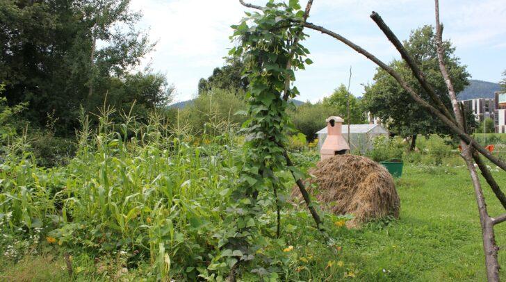 Im nach dem Permakultur-Prinzip angelegten Garten soll Bewusstsein für ökologische Nachhaltigkeit geschaffen werden.