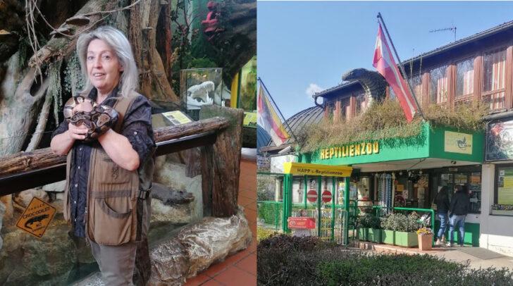 """Helga Happ mit einer von 30 Königpythons, den """"Vorführschlangen"""" des Zoos. Der Reptilienzoo Happ feierte am 1. April seinen 45. Geburtstag."""