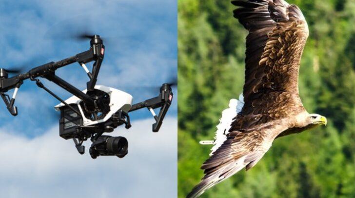 Die Drohnenflüge über dem Bereich der Adlerarena Burg Landskron seien nicht nur eine Gefahr für die Tiere, sondern auch für die Zuschauer.