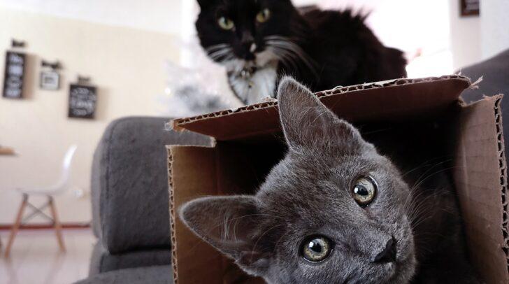 Haustiere und Kinder brauchen während des Umzugs einen geeigneten Platz.