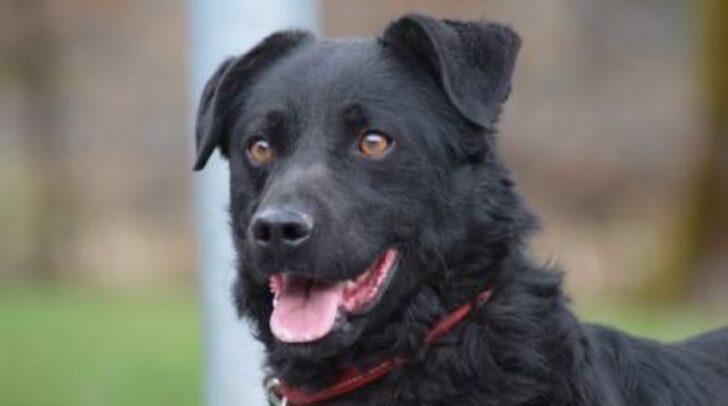 Hund Hugo sucht ein ruhiges Zuhause mit erfahrenen Hundehaltern.