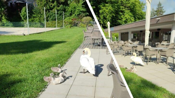 Heute Morgen statteten ein paar tierische Gäste dem Parkbad-Restaurant einen Besuch ab.