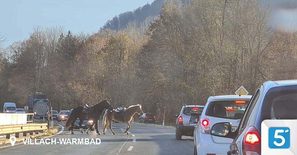 Pferde-sorgten-f-r-Stau-auf-der-K-rntner-Stra-e