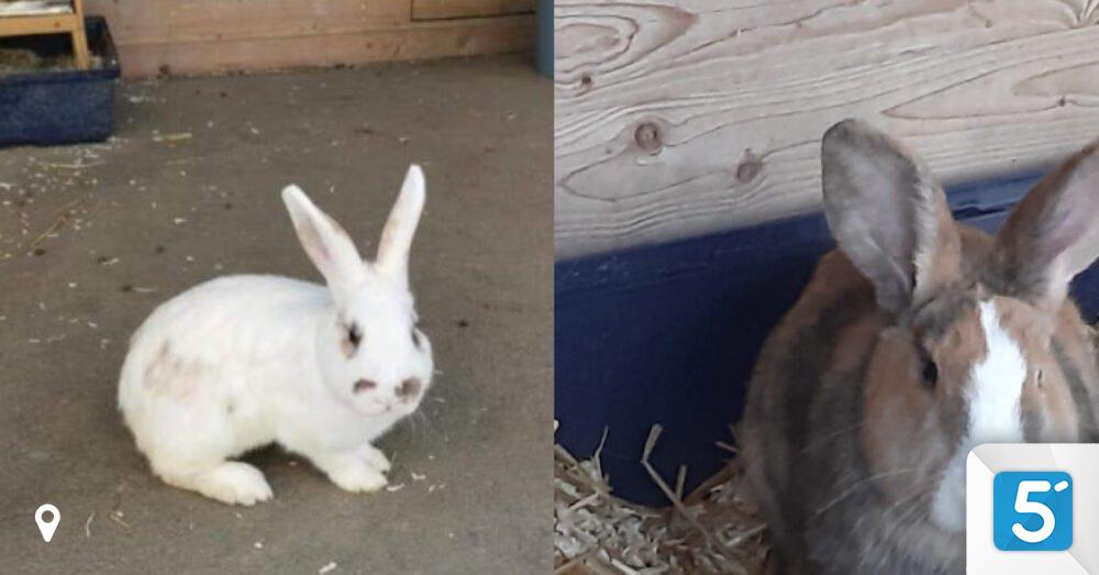 Zwei-s-e-Kaninchen-suchen-ein-artgerechtes-Zuhause