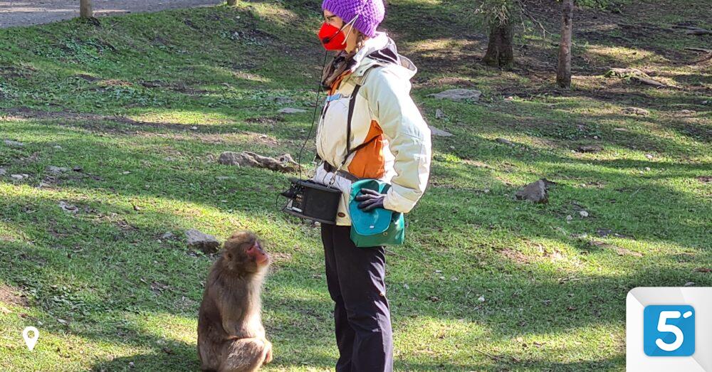 Die-Affen-sind-los-Viele-Besucher-beim-Affenberg