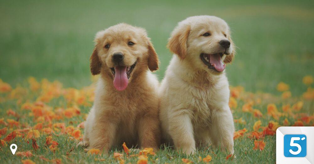 Haustier-Boom-So-viel-kostet-dein-Liebling-im-Laufe-des-Lebens