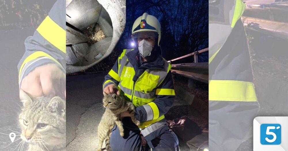 Feuerwehr-rettete-Katze-aus-drei-Meter-tiefem-Abwasser-schacht